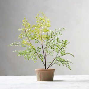 Pottery Barn Faux Potted Southern Maiden Hair Fern